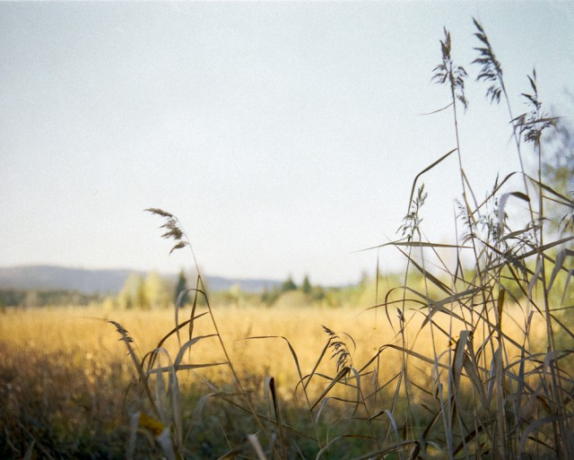Feld im Herbst