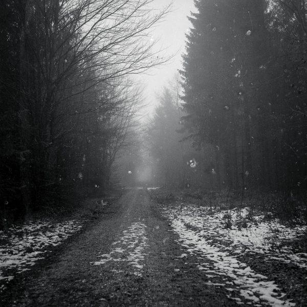 im Wald / Kodak TMAX 400