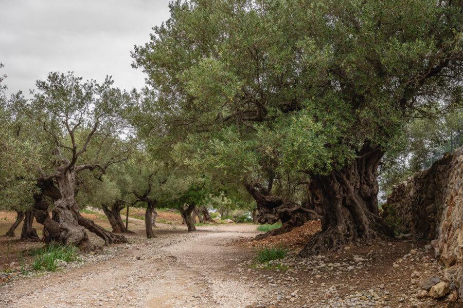 Son Marroig, Sa Foradada, Mallorca